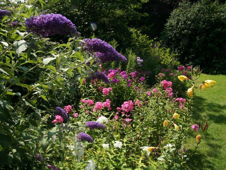 bloeiende nectarplanten