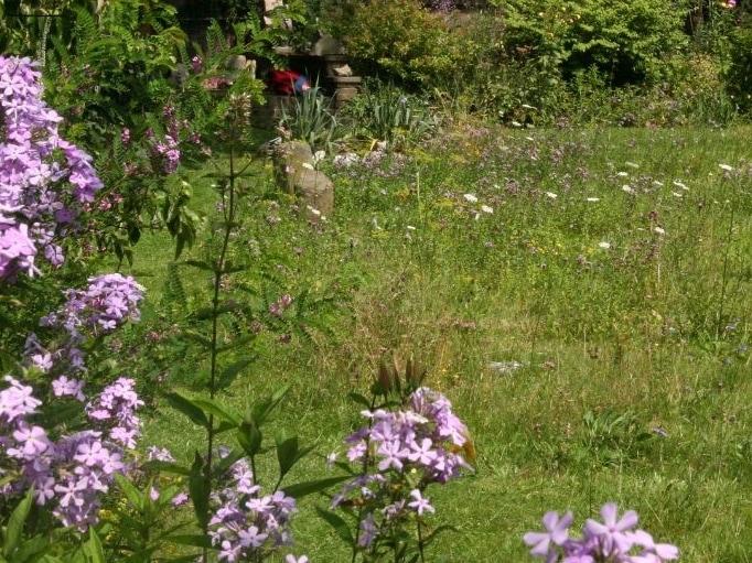 kruidenrijk grasveld